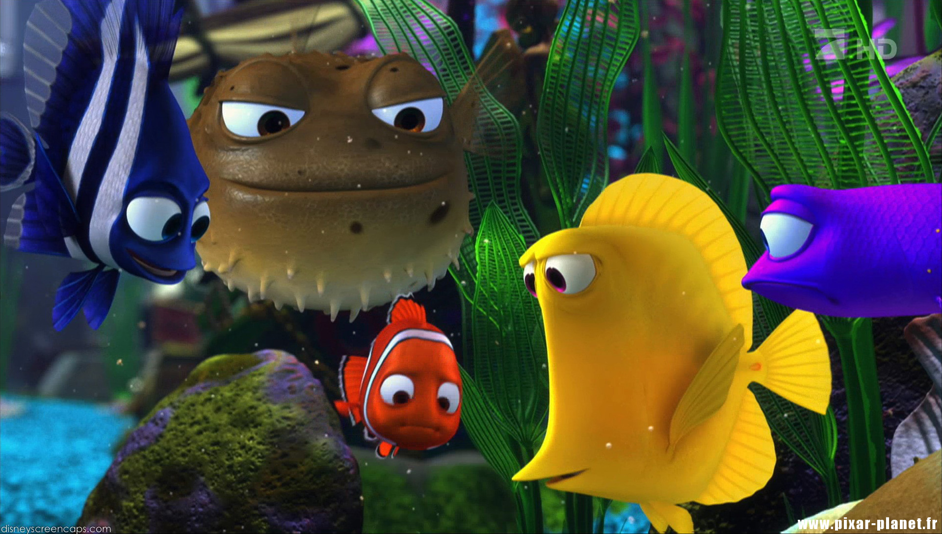 Quotes from finding nemo pixar planet fr for Bubbles fish finding nemo