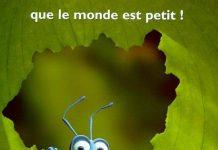 affiche 1001 pattes a bug's life disney pixar poster