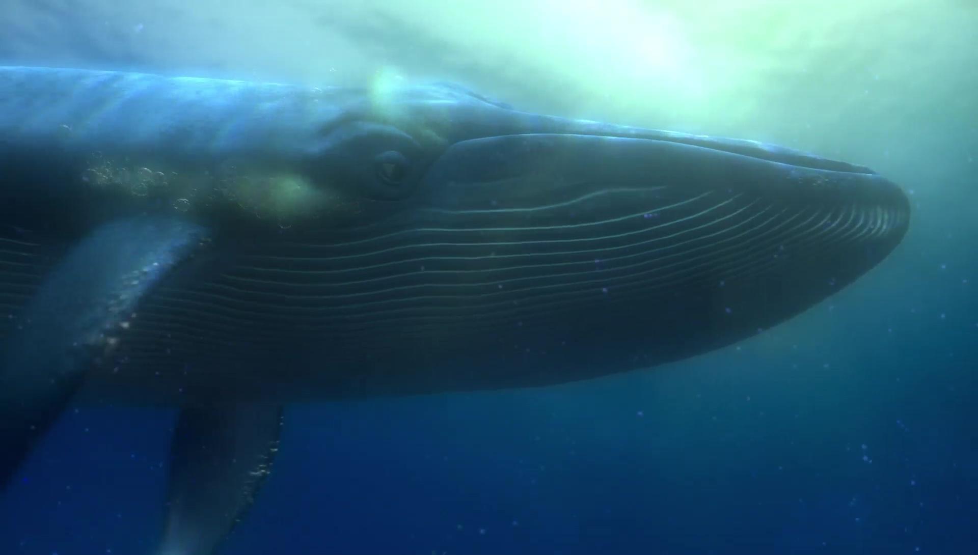 baleine-personnage-dans-le-monde-de-nemo-02