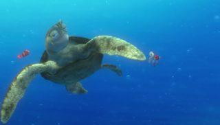 crush monde finding nemo disney pixar personnage character
