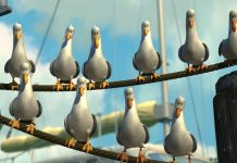 mouette seagulls monde finding nemo disney pixar personnage character