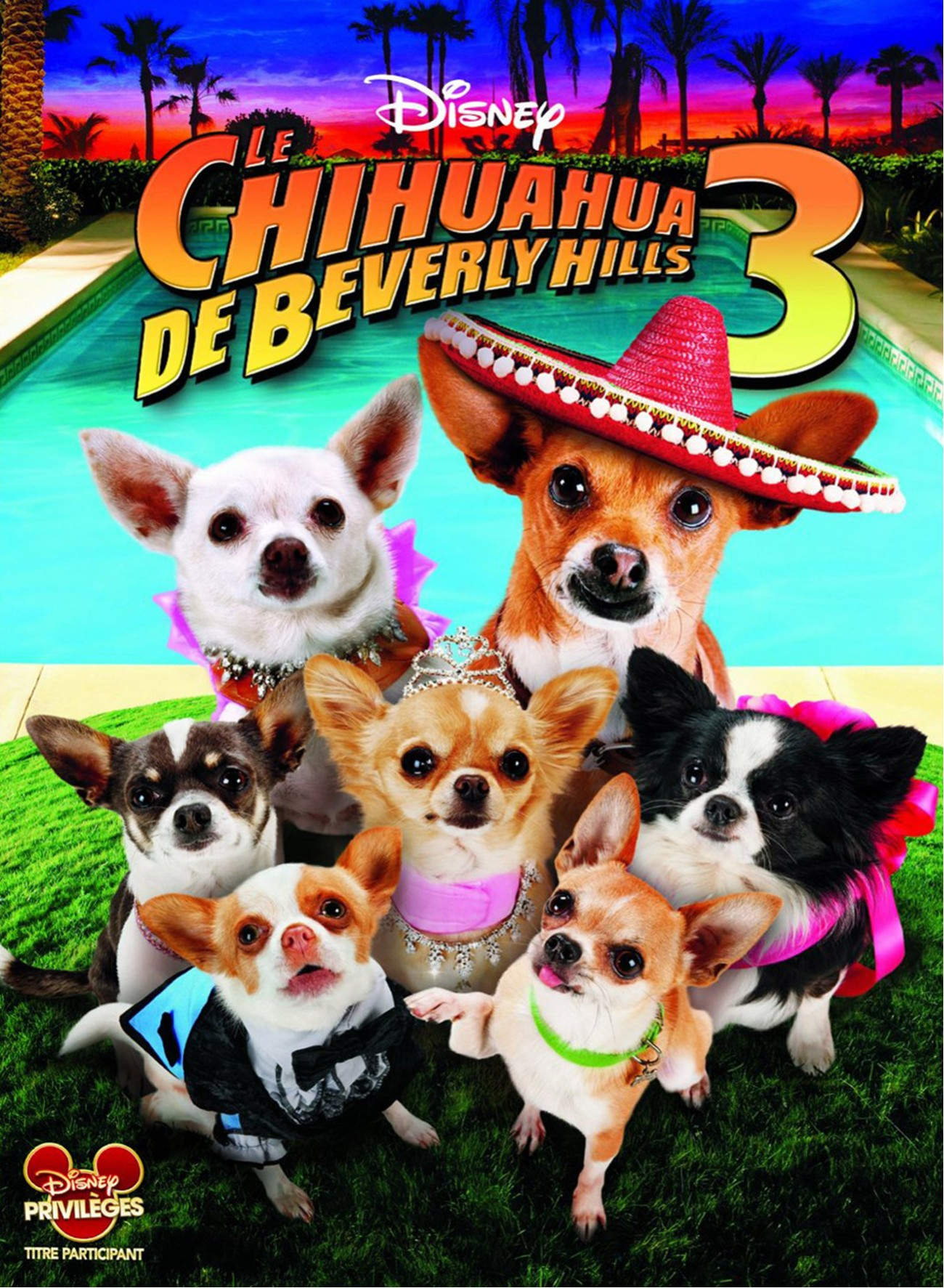 walt disney company walt disney pictures affiche chihuahua beverly hills 3 poster viva fiesta