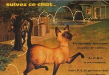 walt disney company walt isney pictures affiche espion pattes velours poster darn cat