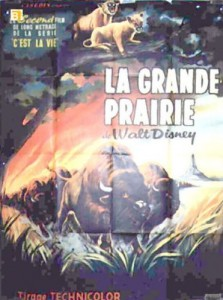 walt disney company walt disney pictures true life adventure affiche grande prairie poster vanishing prairie