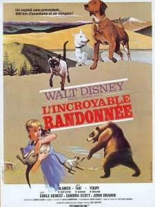 walt disney company walt disney pictures affiche incroyable randonnee poster incredible journey