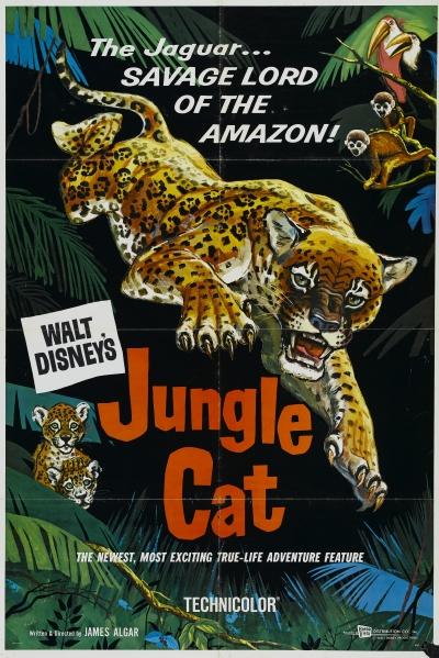 walt disney company walt disney pictures true life adventures affiche jaguar seigneur amazonie poster jungle cat