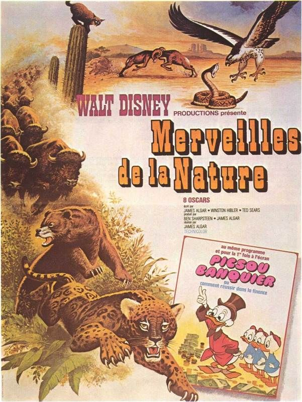 walt disney company walt disney pictures affiche merveilles nature poster best walt disney true life adventures