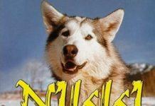 walt disney company walt disney pictures affiche nomades nord poster nikki wild dog north