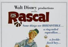 walt disney company walt disney pictures affiche raton nomme rascal poster