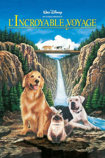 Affiche Poster incroyable voyage homeward bound incredible journey disney
