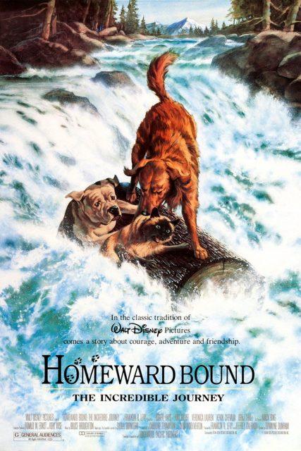 Affiche Poster incroyable voyage homeward bound incredible journey disney