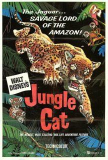 affiche poster jaguar seigneur jungle amazone cat disney true life