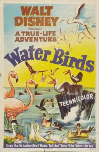 oiseaux aquatique water birds true life adventures Walt Disney Pictures poster affiche