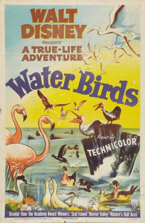 oiseaux aquatique water birds true life adventures Walt Disney Pictures poster affiche