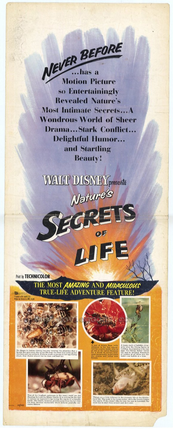 affiche poster secrets vie life disney