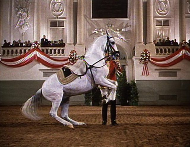 Image grand retour Miracle White Stallions disney