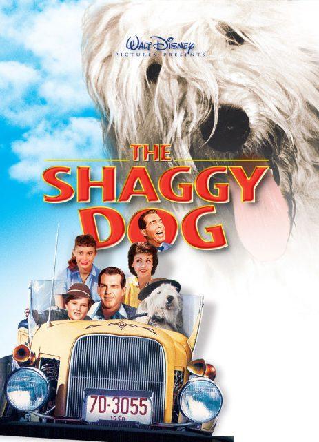 Affiche Poster quelle vie chien shaggy dog disney