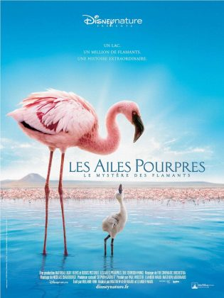 Affiche Poster Ailes pourpre mystère flamants Crimson Wing mystery flamingos disney disneynature