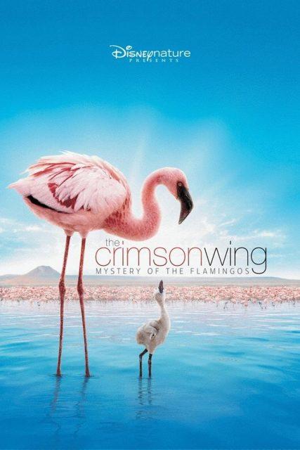 Affiche Poster Ailes pourpre mystère flamants Crimson Wing mystery flamingos disney disneynature