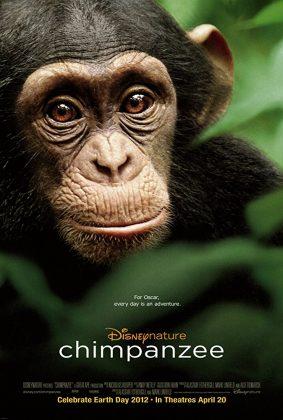 Affiche Poster Chimpanzés Disney Disneynature