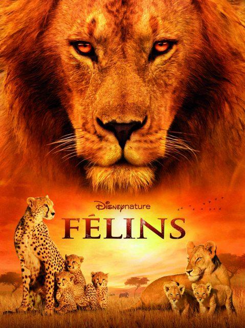 Affiche Poster Félins African cats Disney Disneynature