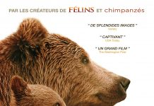 Disney Disneynature affiche grizzly