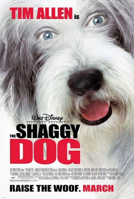 affiche poster raymond shaggy dog disney