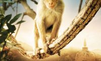 Affiche Poster Au royaume des singes monkey kingdom disney disneynature