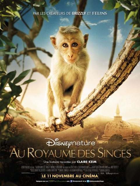 Affiche Poster Au royaume des singes monkey kingdom disney disneynature