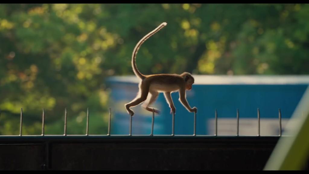 vau royaume des singes Disney Nature