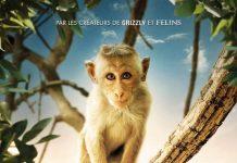 au royaume des singes Disney Nature affiche