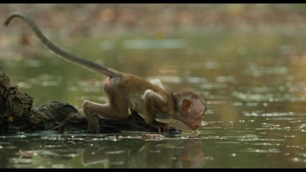 Au-royaume-des-singes-08