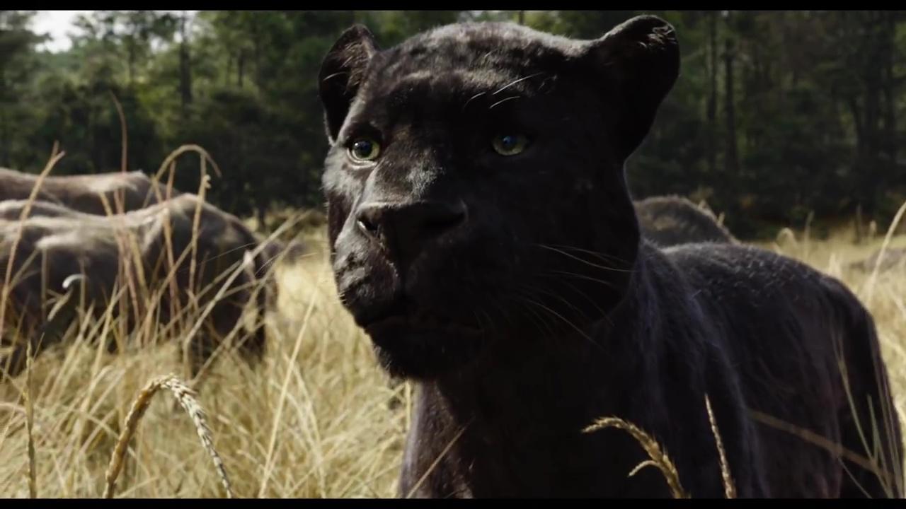 bagheera personnage dans le livre de la jungle le film disney planet. Black Bedroom Furniture Sets. Home Design Ideas