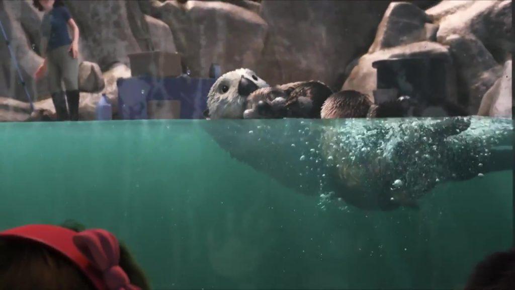 pixar disney le monde de dory finding personnage character loutre