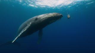 capture dolphins disney disneynature