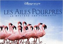 ailes pourpres crimson wing bande originale soundtrack ost disney disneynature