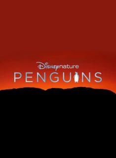 affiche poster penguins disney disneynature