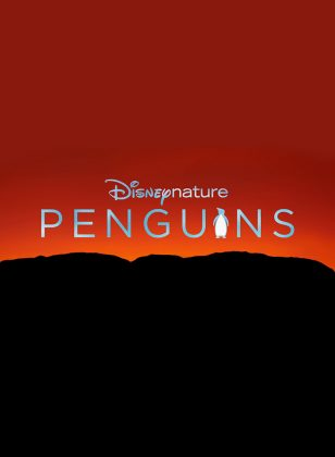 affiche poster penguins disney disneynature