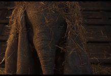 Capture Dumbo film disney