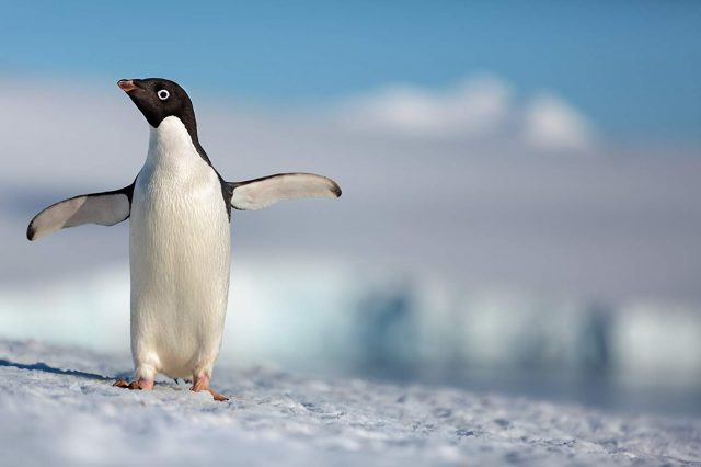 Image penguins disney disneynature