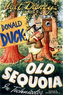 Affiche Poster vieux sequoia old disney donald