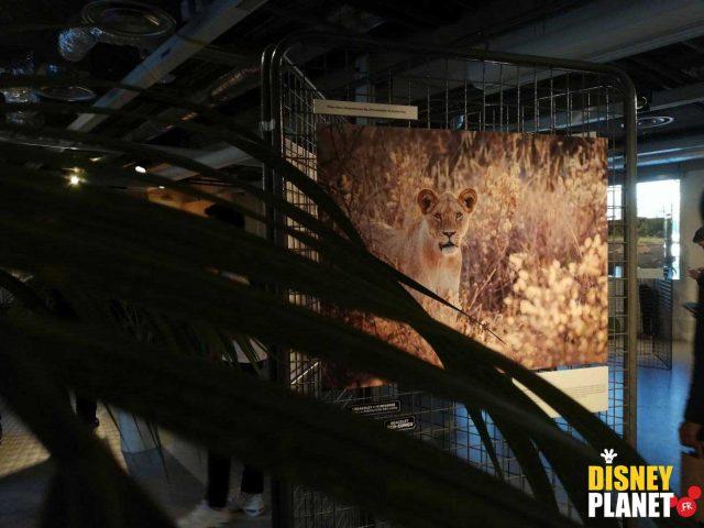 Image protection roi lion disney