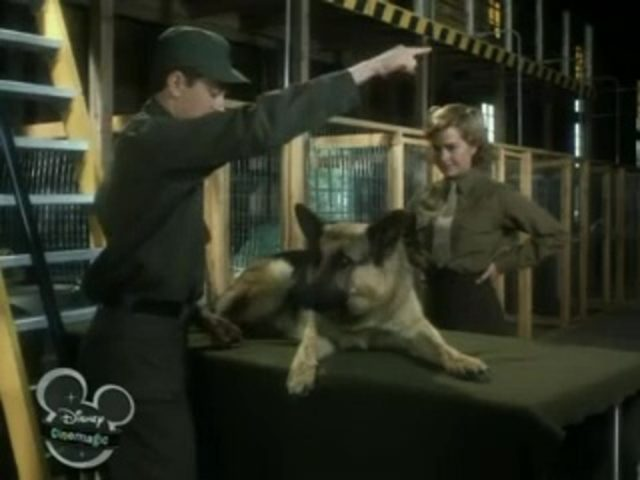 Image chips chien combat war dog disney channel