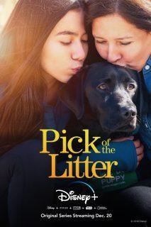 Affiche Poster pick litter disney+ plus