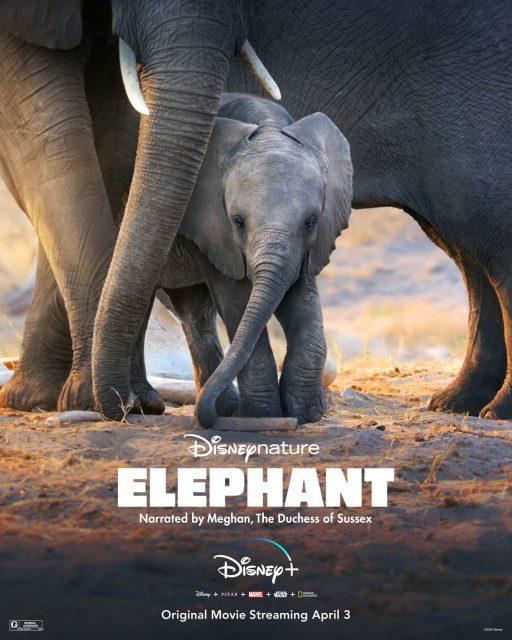 affiche poster elephant disney+ disneynature