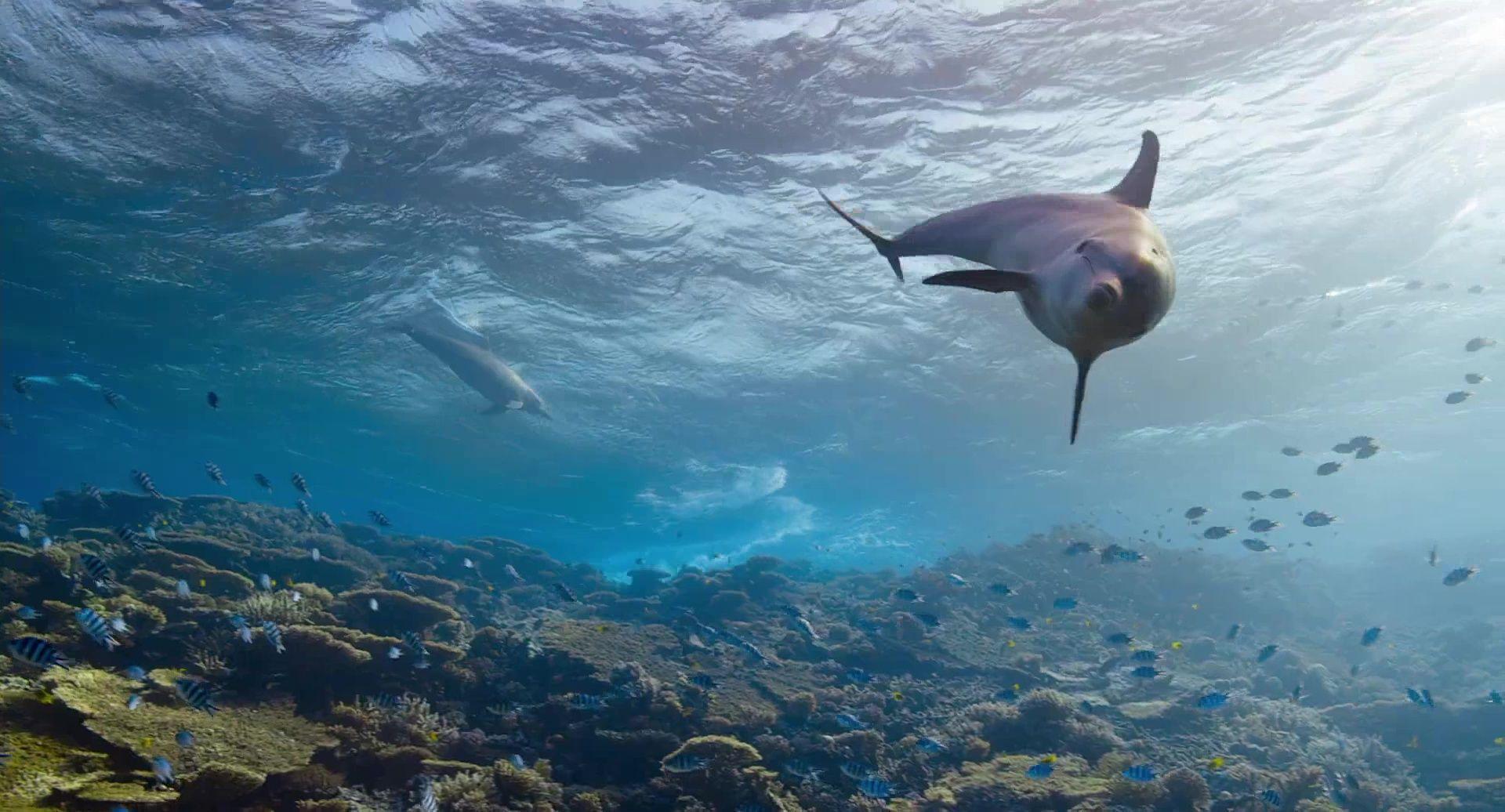 image dolphin reef disneynature disney+
