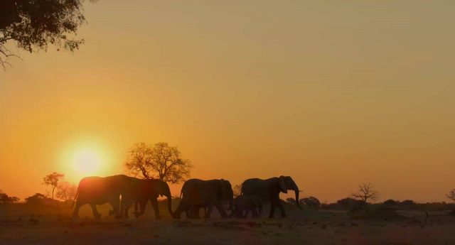 image elephant disneynature disney+