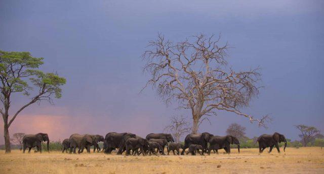 image elephant disneynature disney+