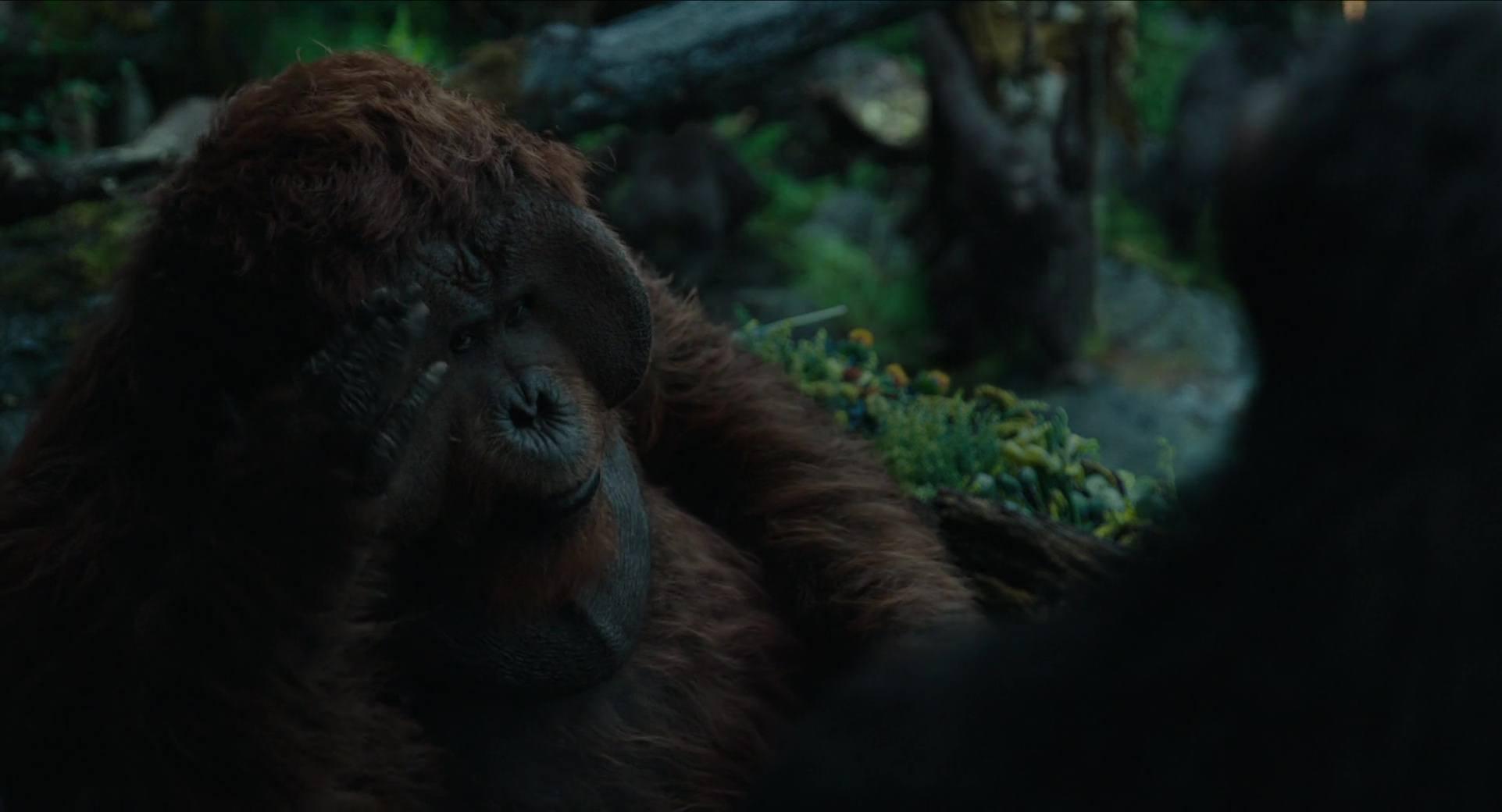 image planète singes affrontement daw planet apes disney fox