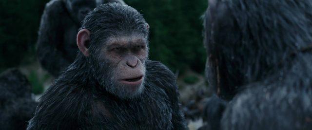 image planète singes suprématie planet apes war disney fox